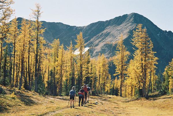 Golden Larches - Hope Mountain Centre