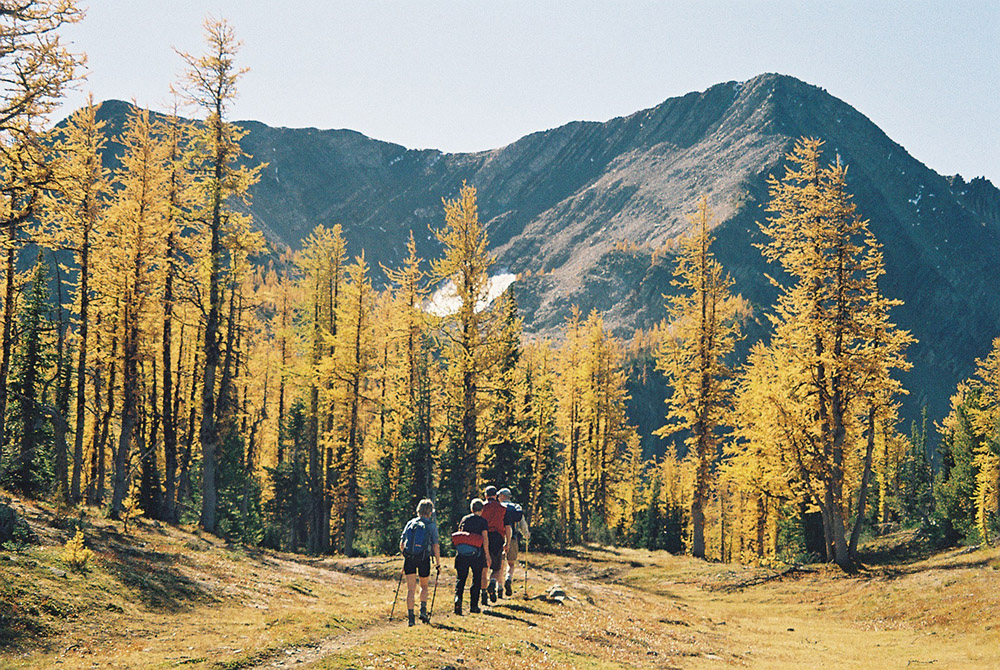 golden-larches-hope-mountain