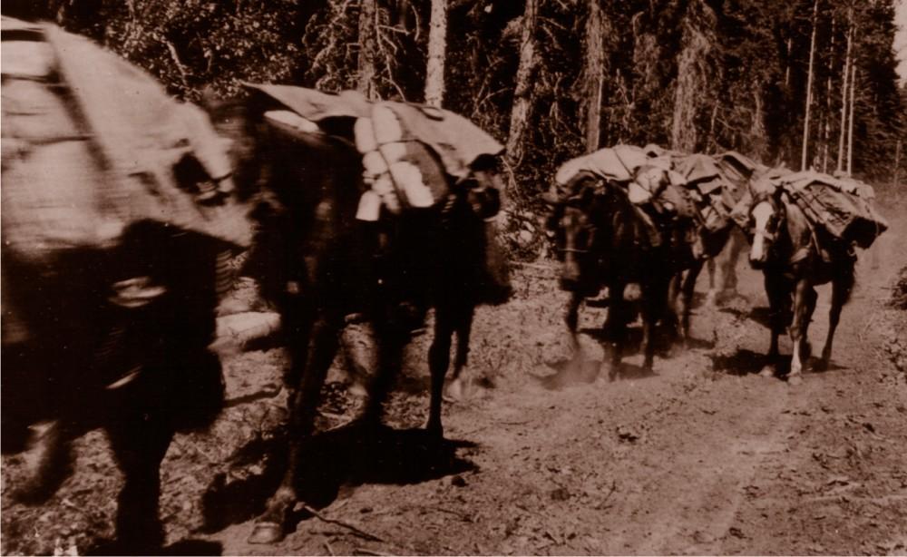 HBC History Horse Train