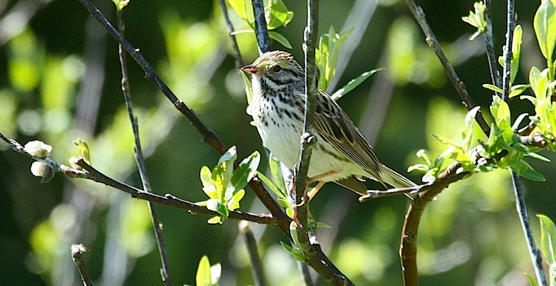 Birding in Hope