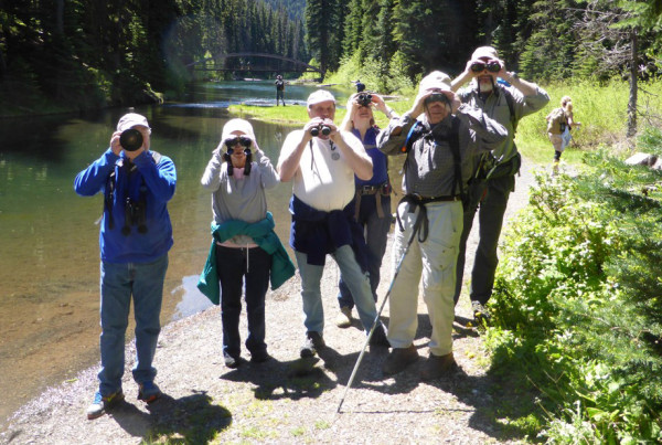 Manning Park Bird Blitz - Hope Mountain Centre