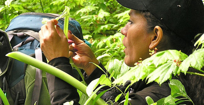 Traditional Plants with Yvette John - Hope Mountain Centre