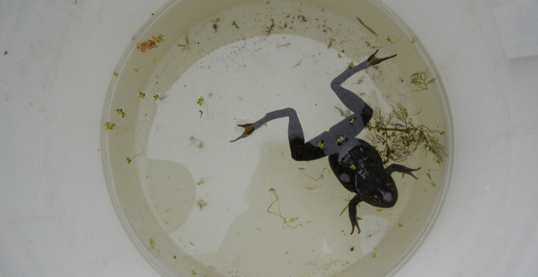 Pond Creature Crawl at Thacker Marsh, Hope BC - Hope Mountain Centre