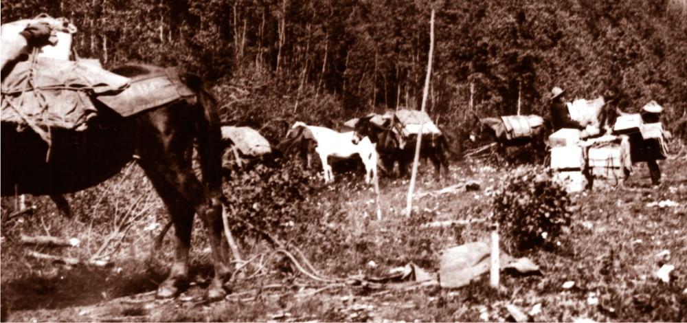 HBC History - Horse brigades were a unique feature of the BC fur trade.