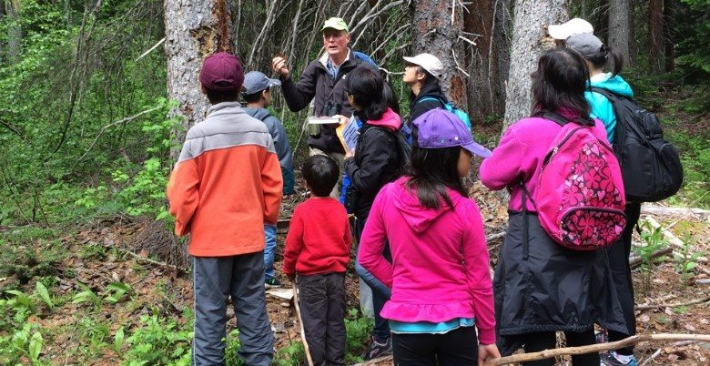 Forest ecology lesson
